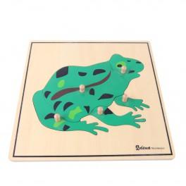 Montessori Premium : Puzzle de la grenouille